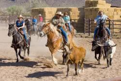 乗馬、ホーストレッキング、ツーリング体験ツアー