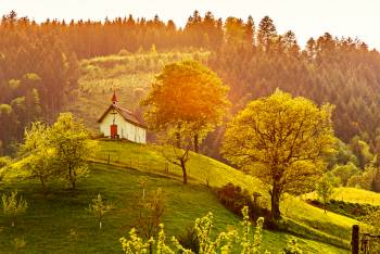 ドイツの森~物語が生まれる場所~