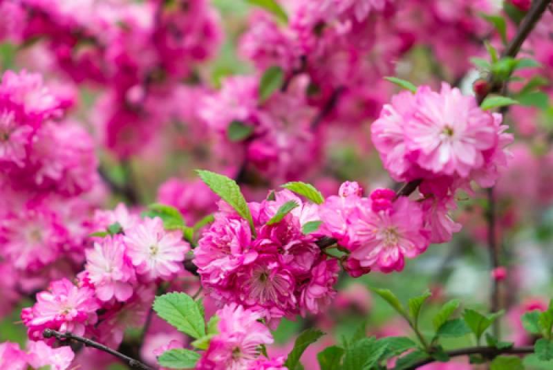 ウラジオストクでお花が見どき