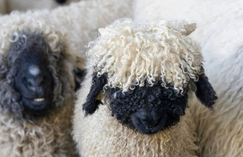 スイス&アルプスで出会う動物たち【まとめ】