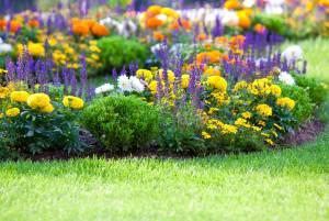 アムステルダムの期間限定「秘密の花園」
