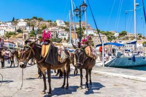 移動手段はロバ?ギリシャの楽園イドラ島