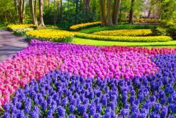 春のオランダ・ベルギーを満喫!~キューケンホフのチューリップ・キンデルダイクの風車・ベルギー3都市観光~充実の6日間