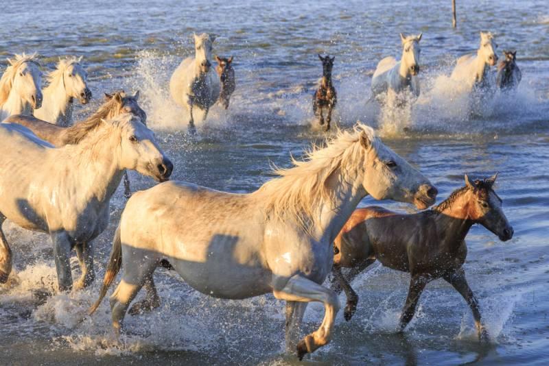 【フランスで馬を楽しむ旅 凱旋門賞&パリ馬の見本市2017】