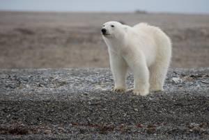 極地への大冒険(北極という奇跡の場所)