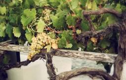 ギリシャワインの産地を旅する ~クレタ島&サントリーニ島~ 6日間