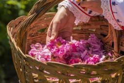 2020年 カルロヴォのバラ祭り6日間