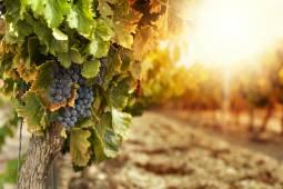 フランスワインツアー|☆2018年栄光の3日間☆ ブルゴーニュとシャブリのドメインをワインに詳しい現地日本人ドライバーがご案内☆