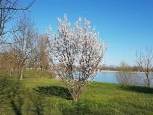 クロアチアもようやく春!