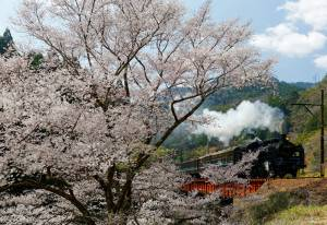 The train whistles in the Japanese countryside