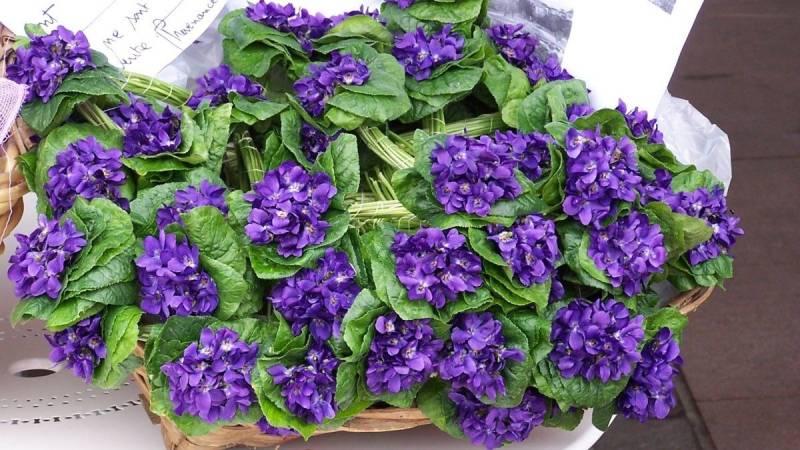 フランス 花を巡る旅 すみれ祭り