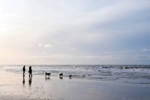 オランダのクレイジーなニューイヤーイベント「寒中水泳」