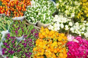 世界最大の花市場・アールスメール