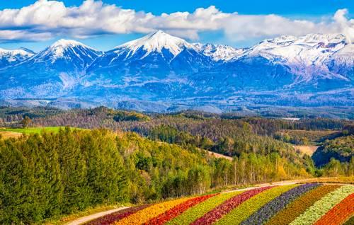 Contempler  l'arrivée du printemps à Hokkaido