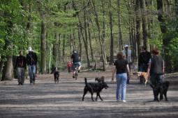 動物保護施設<ティアハイム>見学とゆったりベルリン滞在 5日間