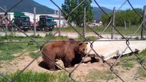 出先で見かけたクロアチアの動物達・パート2