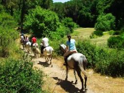 [8/4出発]パリ近郊で乗馬ツアー!「乗馬トレッキング」イル・ド・フランスの名所めぐり 7泊8日