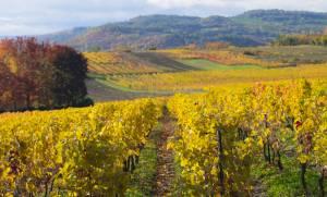 フランス観光を楽しもう!地方を巡る旅シリーズ●オーヴェルニュ地方●グルメ・ワイン編