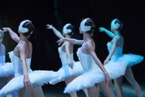 オランダ国立バレエ団の公演日程(2019~2020)