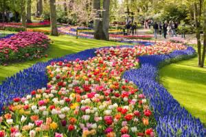 花が咲き乱れる春のオランダ&ベルギー