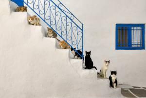 猫と暮らす in ギリシャ