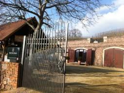【ドイツワインの旅 / ドレスデン発着】ドレスデンでワインショップを営むワイン専門家がご案内!個人では訪問が難しいリコ・ハンシュ醸造所見学ツアー 半日