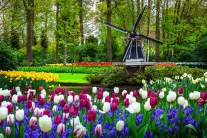 世界最大の春の公園でチューリップ畑を